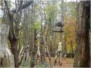 Photo of the Dark Woods with hangings and crotches